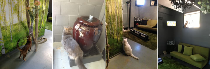 cattery-melbourne