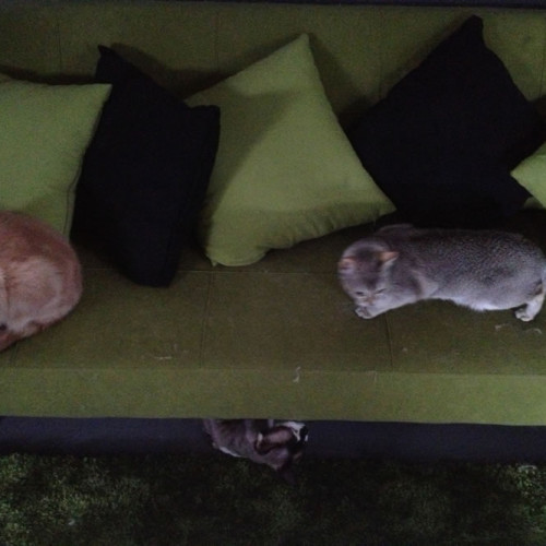 gallery-cats-203