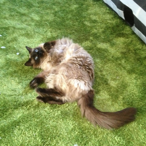gallery-cats-221