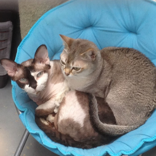 gallery-cats-249